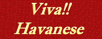 Viva Havanese